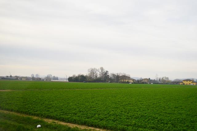 イタリア研修-農場